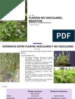 14va clase. briofitos.pdf