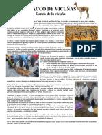 CHACCO de vicuñas reseña