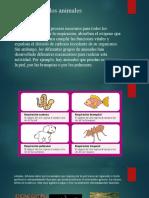 Respiración en los animales.pptx