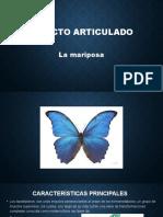 Insecto articulado.pptx