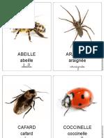 Imagier-insectes-petites-betes-3-écritures