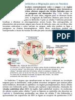 Imunologia Básica - 00045