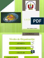 LA CELULA 7.pptx