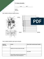 Guía didáctica Célula procarionte y eucarionte primeros medios