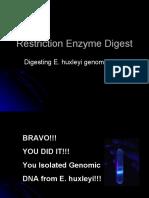 Restriction Enzyme Digest
