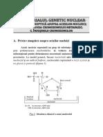 2. Materialul Genetic Nuclear. a. Privire Sinoptica Asupra Acizilor Nucleici. B. Morfologia Cromozomului Metafazic. C. Insusirile Cromozomilor.