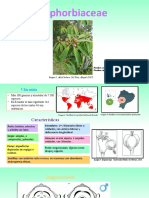 Familia Euphorbiaceae