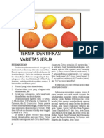 teknik identifikasi jeruk