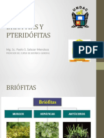 ING. briofitas y pteridofitas.pptx