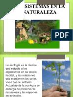 interacciones en los ecosistemas5 basico.ppt