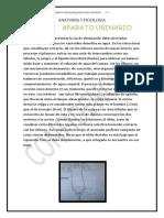 08TAREA APARATO ORINARIO Y REPRODUCTOR.docx