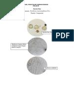 Hasil Praktikum Farmakognosi B-Minggu 4.pdf