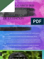 animales en peligro de extincion.pptx