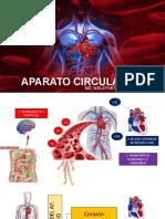 APARATO CIRCULATORIO Y  CIRCULACION