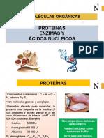 BIOMOL_PROT_ENZIMAS_ÁC_NUCLEICOS (2)