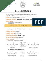 beta oxidación FICHA DE APRENDIZAJE