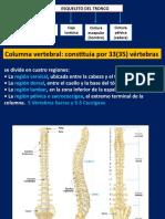 Tronco huesos y articulaciones