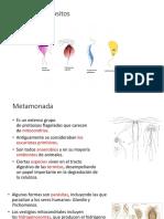 14. Tricomo,Oximo,Kinesto.Coano y Amibas.pdf