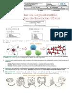Guía de niveles de organizacion biológica de los seres vivos