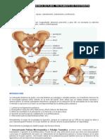 ap - Osteopatía dinámica de pubis