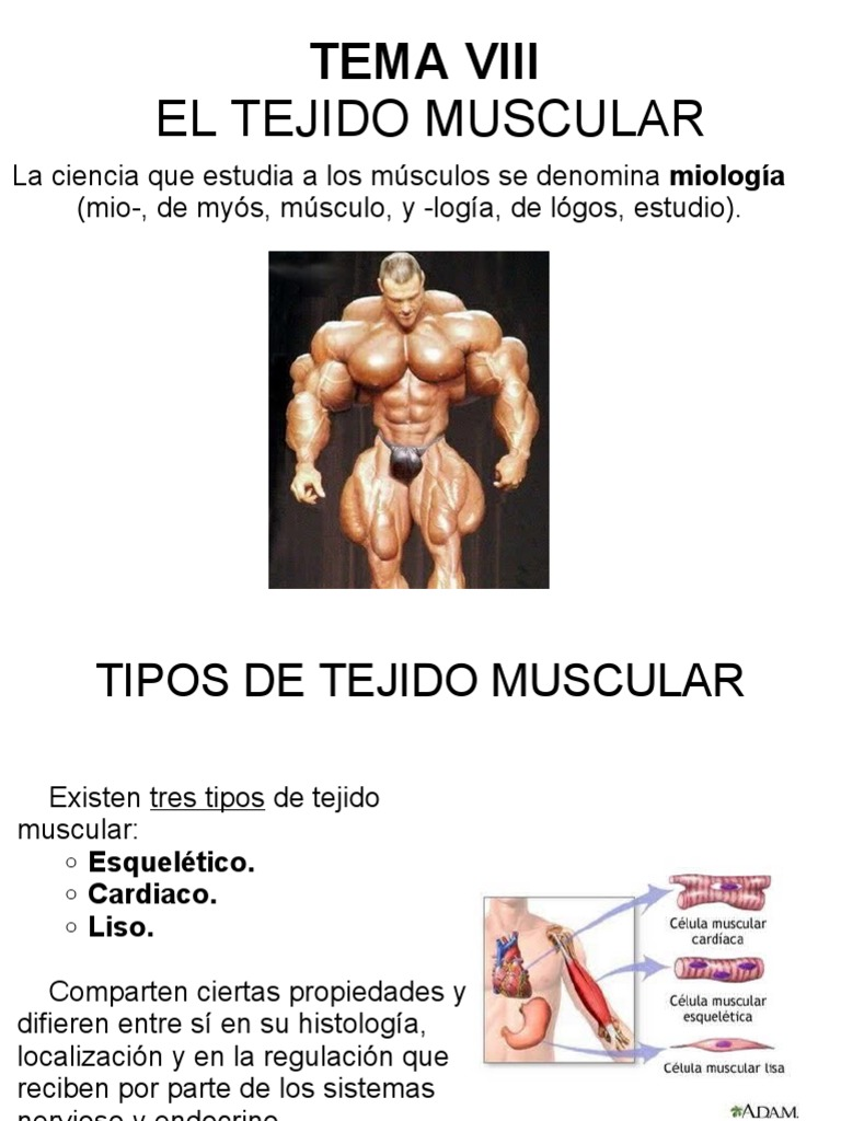 Tema Viii: El Tejido Muscular