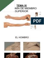 TEMA IX ANATOMÍA DE MIEMBRO SUPERIOR