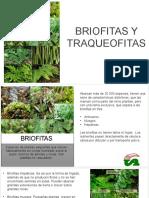 422004538-Briofitas-y-Traqueofitas.pptx