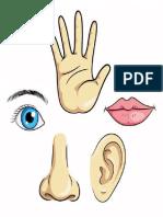 ojo-nariz-ojo-labios-mano_119631-3