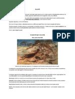 Aracnidi - Scorpioni ed Euripteridi