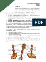 tarea#5 anatomia II