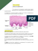 Identificación de células animales en el epitelio bucal.