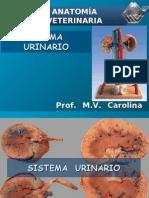 21200253 Sistema Urinario Prof Carolina Maldonado