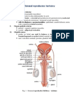sistemul_reproducator_barbatesc_ciclul_menstrual_nidatia_sarcina_nasterea