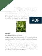 PLANTAS MEDICINALES DE TABASCO