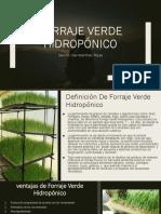 Derrick Joel Martinez Rojas-1.097.611.419-Ingenieria Agronomica-Pastos y Forrajes-Grupo C-Taller 10-Forraje verde hidropónico