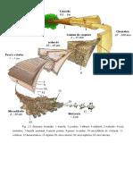 Structura_macro-microscopica_a_lemnului.pdf