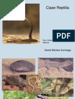 Cordados Reptilia DMI 2019-1 (1)