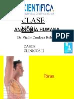 4. Anatomia_3_CCII_USCUR_2020.pptx