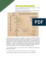 el papel central del ácido cítrico en el metabolismo
