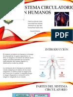 Sistema circulatorio en humanos