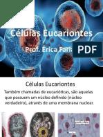 celula eucarionte