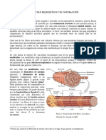 Material de Apoyo 1_ Músculo Esquelético
