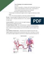 Caracteristicile_Anatomice_si_Fiziologice_ale_Circulatiei_Intrauterine_-7183.docx