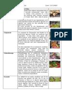 AGRICULTURA Y MINERIA EN GUATEMALA.docx
