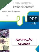 ADAPTAÇÃO+E+LESÃO+CELULAR+AULA