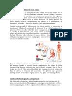Desarrollo de la hematopoyesis en el cuerpo