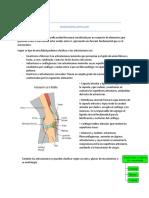 Biomecánica Articular Resumen Lic. ALVAREZ SAMANTA