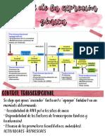 (ppt 2) exprecion genica pdf (1)