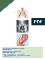 Anatomía con orientación clínica-556-730 (1)