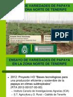 EnsayoVariedadesPapaya (1).pdf